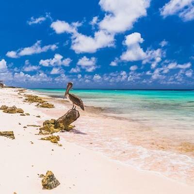 Trainer gezocht voor Bonaire